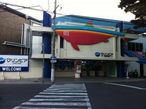 松島水族館 (1)