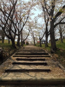 桜 宮城 (11)