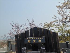 桜 宮城 (19)